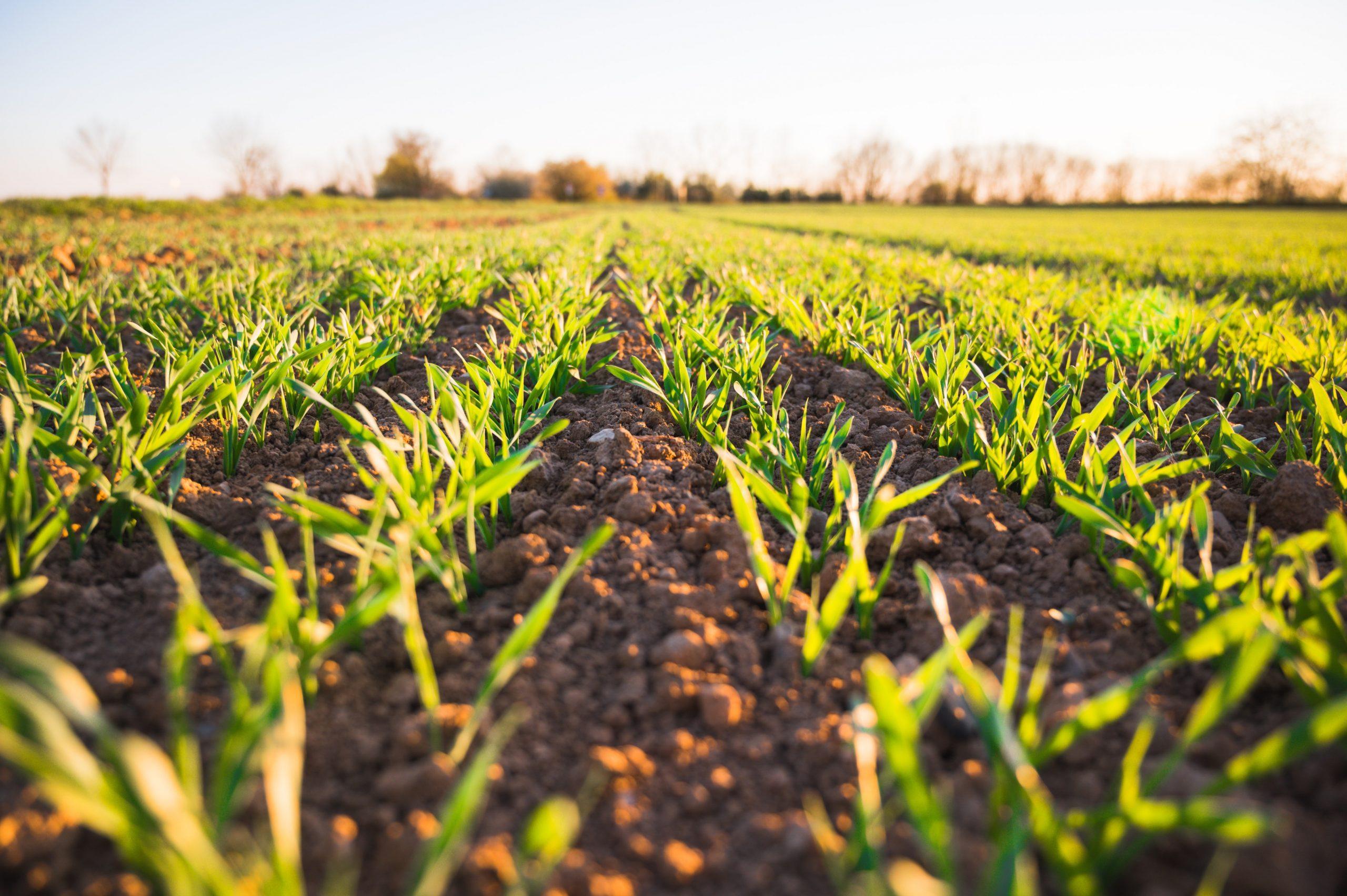 zöld talaj